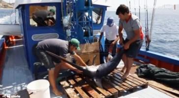 I cacciatori di pesce spada, l'antica arte della pesca in Calabria: il video