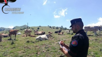 I controlli dei militari sui pascoli tra Calabria e Basilicata
