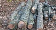 Furto di legna, arrestato 29enne a Soriano Calabro