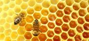 """""""Non solo miele"""", gli apicoltori calabresi verso nuovi mercati con i prodotti alternativi"""