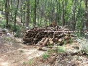 Sequestrata area boschiva a San Sosti