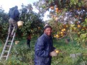 In Calabria ancora lavoro ai limiti della schiavitù