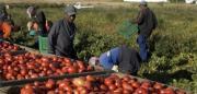 Migranti sfruttati nei campi per un euro a cassetta, 29 indagati nella piana di Gioia Tauro