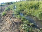 Nei campi inquinati dai liquami fognari si coltiverà la cipolla rossa