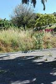 Lamezia, la denuncia di Fdi: 'Incuria nella zona termale di Caronte'