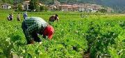 Il settore agricolo non cresce, Coldiretti: «La Regione investa»