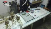 Nicastro, scoperto un laboratorio della droga