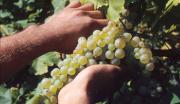 Lamezia Wine Fest, due giorni dedicati alle eccellenze